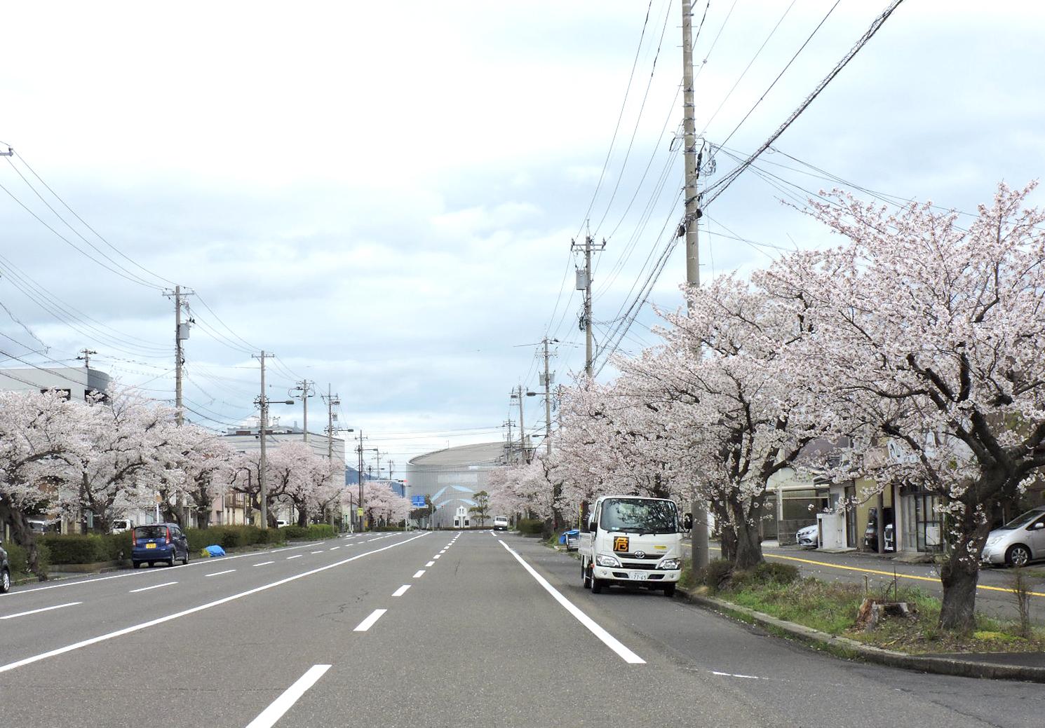 さくらさくら🌸奥井海生堂元町倉庫、金ヶ崎本社周辺